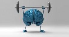 Cerebro en marcha